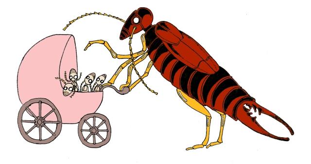 Maman forficule prend grand soin de ses enfants. Pas question de les nourrir avec du Mc Do ou de les crisser devant les Télétubbies.