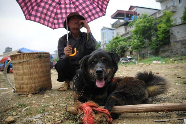 Vietnam, 2008. Ce chien est vendu pour sa viande. Es-tu spéciste?